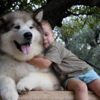 Мальчик со щенком аляскинского маламута