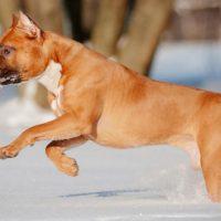 Красивый пес бежит по снегу