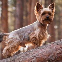 Йоркширский терьер стоит на стволе дерева